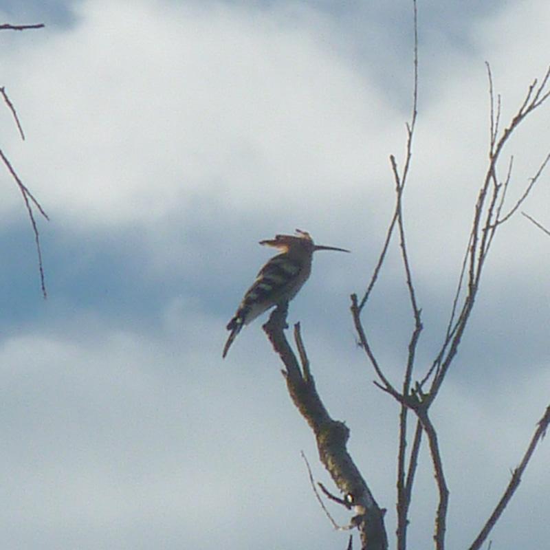 Uccello.jpg