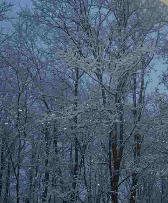 Nevicata 28 12 20 2-.JPG