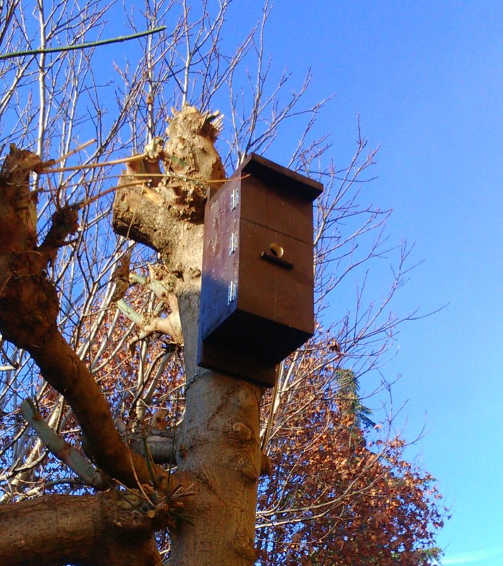 nido con telecamera 10.jpg