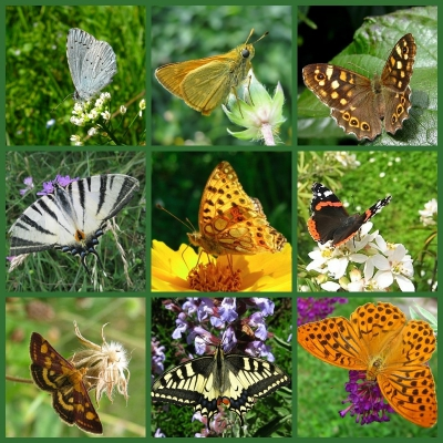 collage- farfalle.jpg